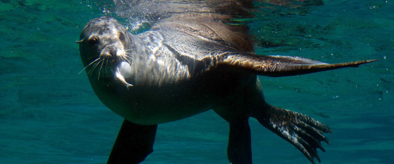 Sea Lion Cove Fresno Chaffee Zoo