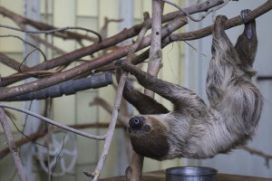 2T Sloth 009