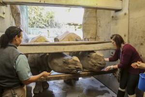 GOH Rhino BTS 034