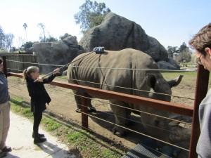 Rhino Scratch - IMG 7136