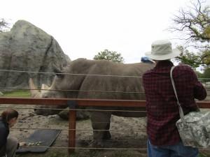 Rhino Scratch - IMG 7144