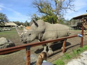 Rhino Scratch - IMG 7198