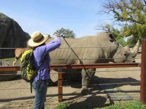 Rhino Scratch - IMG 7315